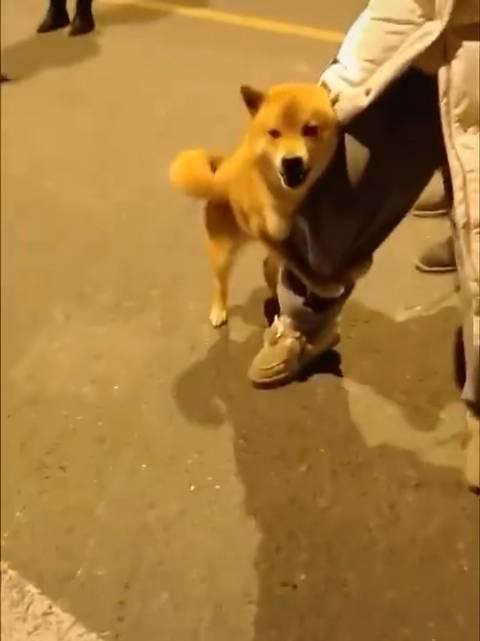 和狗狗并排散步被骂了